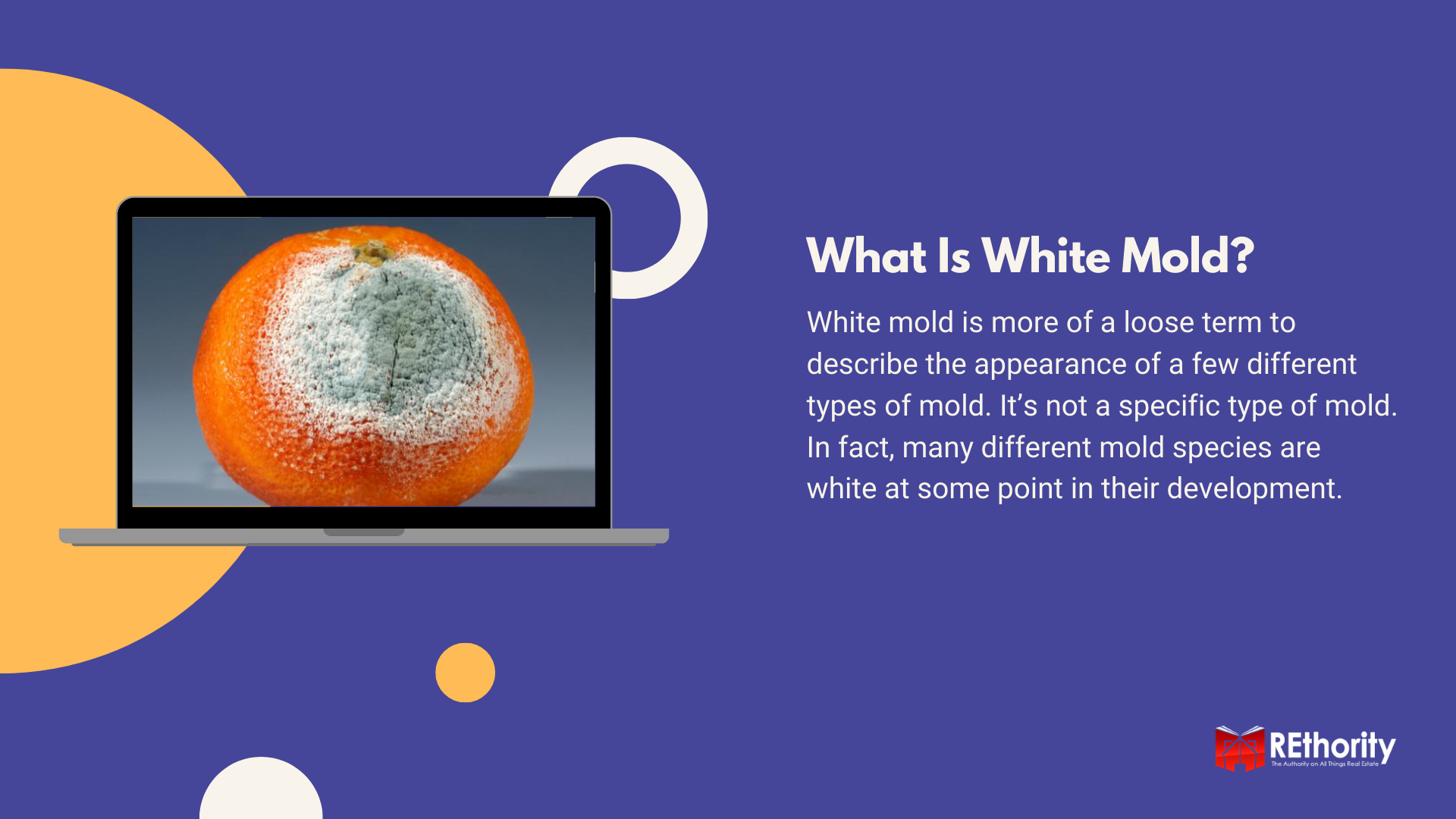 What is White Mold graphic featuring penicillium growing on an orange displayed on a computer screen alongside a description answering the question
