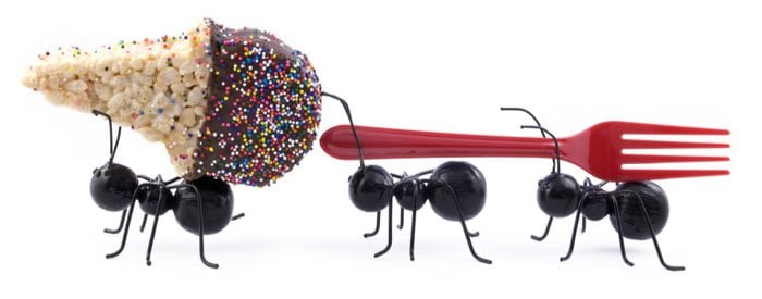 Toy black sugar ants carrying a cereal treat ice cream cone and a fork, concept, isolated on white background, horizontal with copy space