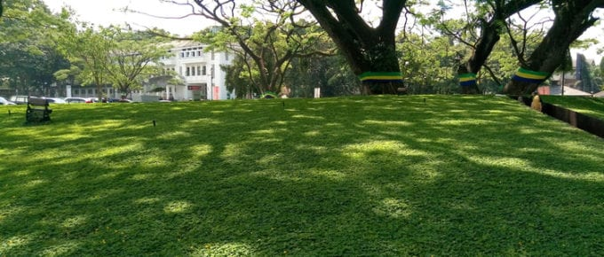 As a piece on the best grass seed for shade, mounds of green grass and large shade trees