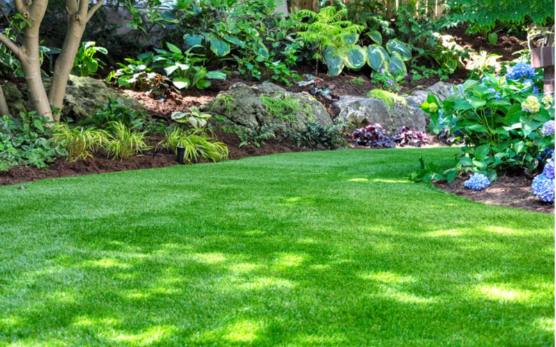 Image of a lawn that is weed free because the homeowner sprayed 24d