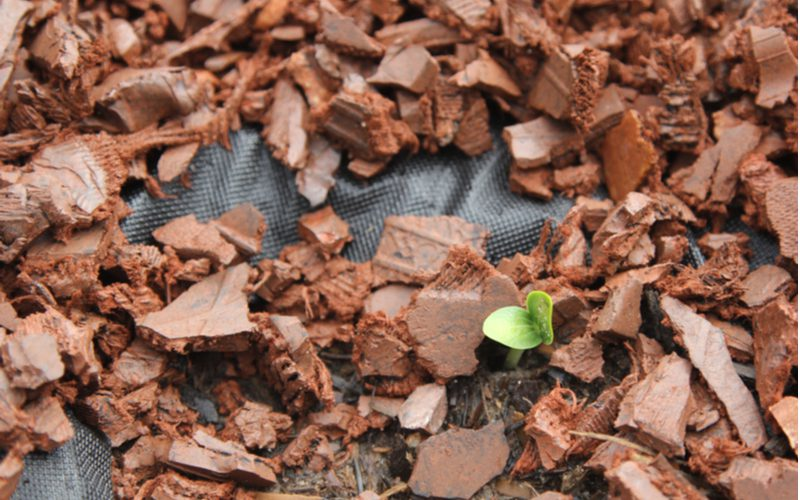 Shredded rubber, a great wood mulch alternative, sits on a landscape weed barrier