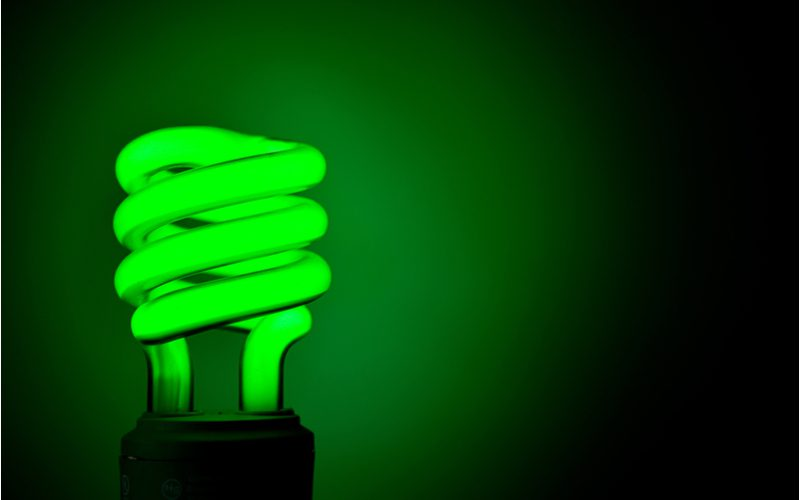 As an image for a piece on what does a green porch light mean, a green eco light bulb illuminates a green room